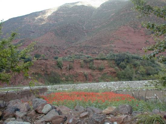 Marrakech Maroc sommet campagne coquelicots ourika
